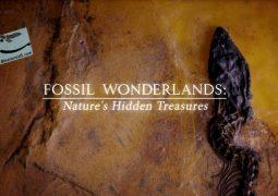 سرزمین عجایب فسیل ها: گنج های پنهان طبیعت (۲۰۱۴)