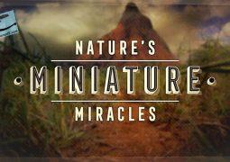 معجزه های مینیاتوری طبیعت (۲۰۱۷)